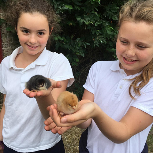Hanford School-Busy Birds